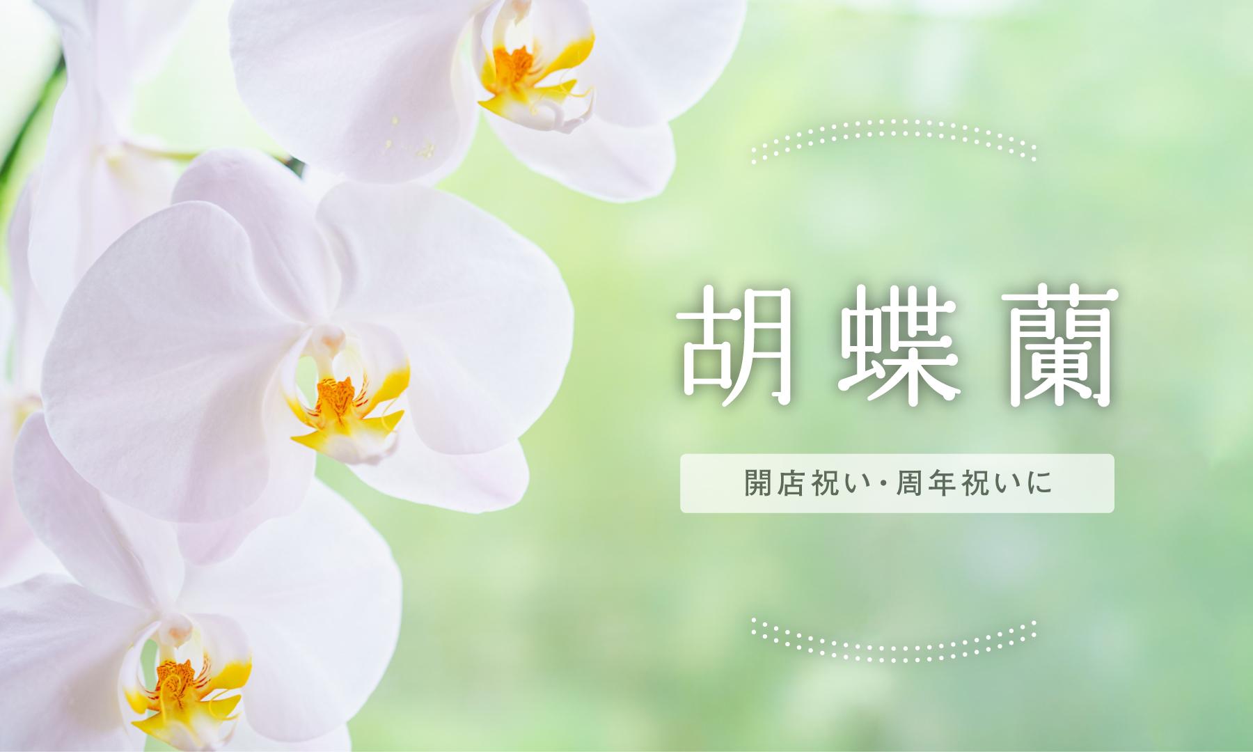 法人ギフトの定番・胡蝶蘭